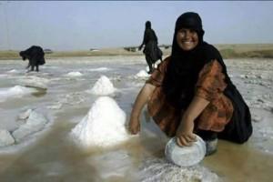 جمع الملح في الفرات بعد أن جفت مزارع الأرز