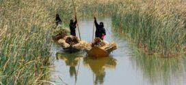 أهوار العراق تستغيث فهل من يستجيب